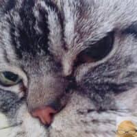 カミツキ・ネコ
